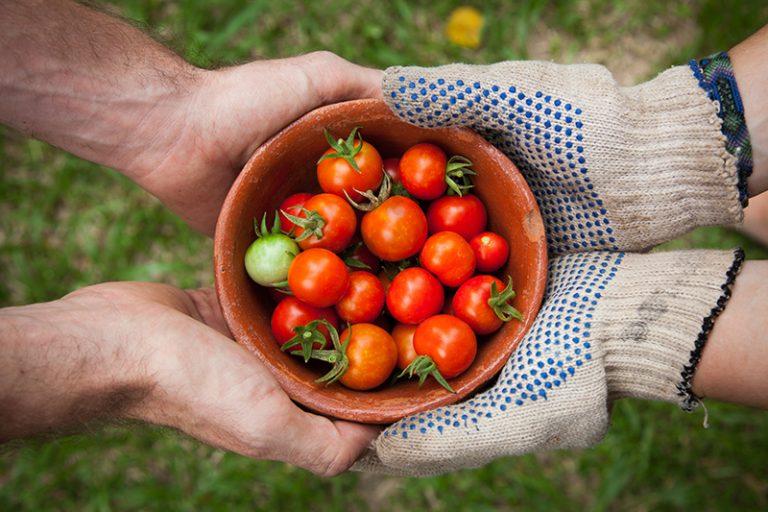 Tomato Fresh Night